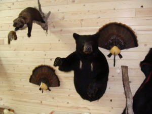 Black Bear - Lundgren's Taxidermy