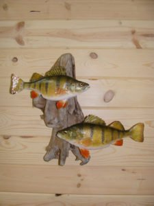 Perch - Lundgren's Taxidermy