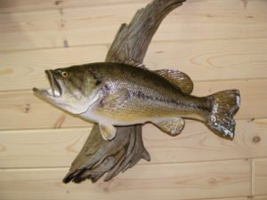 Bass - Lundgren's Taxidermy