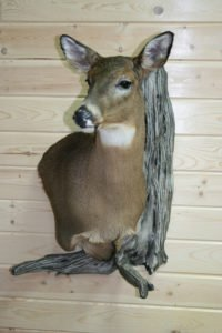 Whitetail Doe - Lundgren's Taxidermy