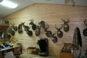 Whitetail Deer - Lundgren's Taxidermy