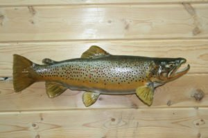 Brown Trout - Lundgren's Taxidermy