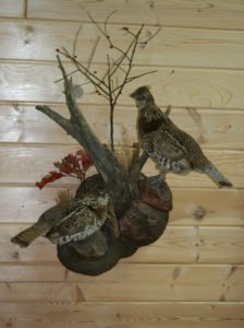 Grouse - Lundgren's Taxidermy